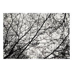 Covor Nature 4D Black/White Trees